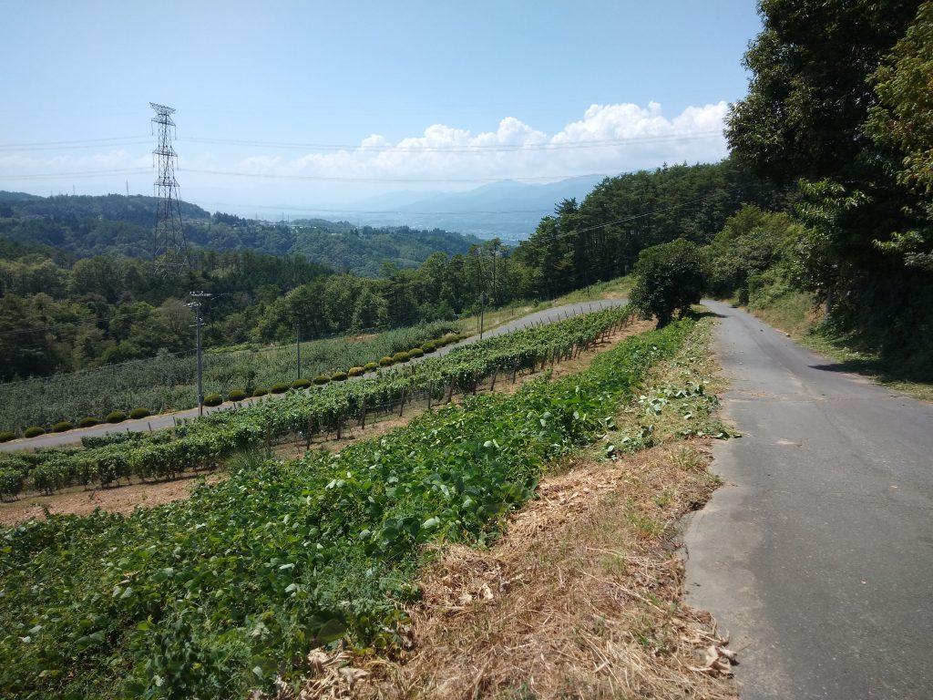 草刈り後の村道とブドウ畑